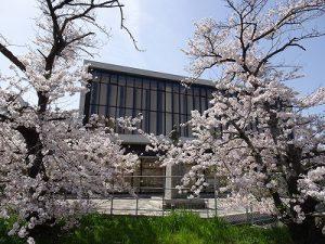 ◎ほっとする桜スポットをご紹介!