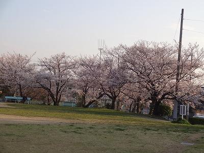 桜の不動産005