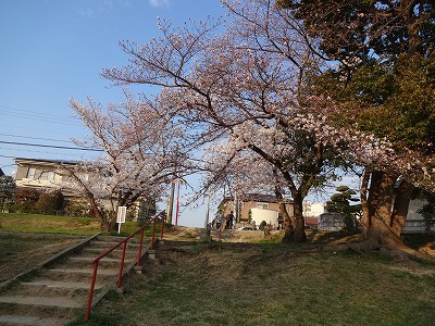 桜の不動産001