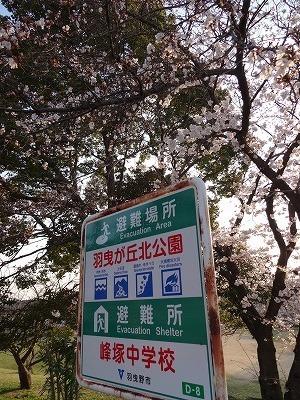 桜の不動産004